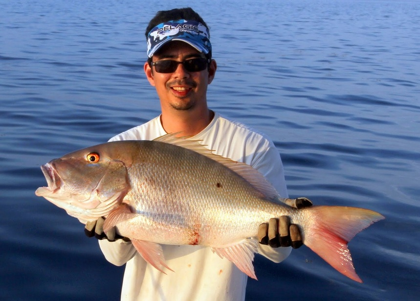 How to catch mutton snapper for Snapper fish florida