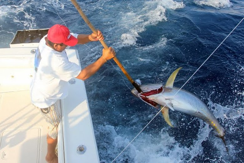 How to catch yellowfin tuna tips for fishing for for What does a tuna fish look like