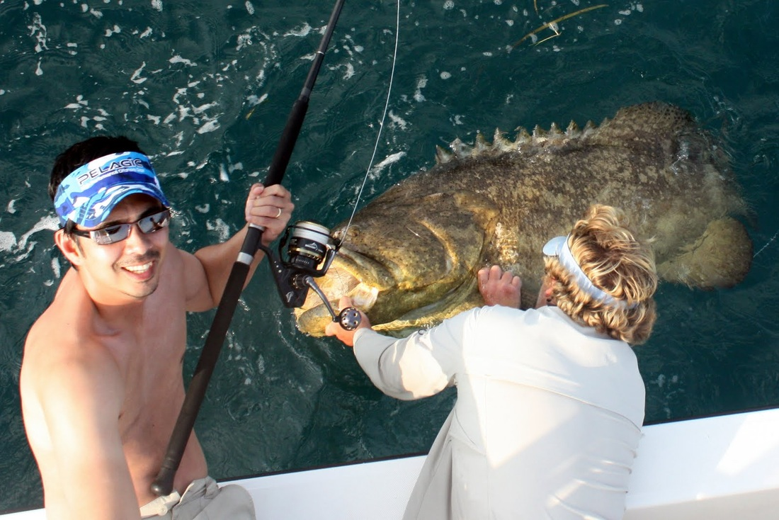 how to catch goliath grouper - tips for fishing for goliath, Reel Combo