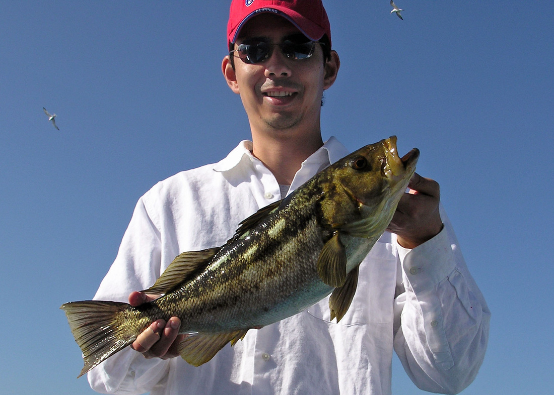 How to catch calico bass fishing for calico bass how for Calico bass fishing